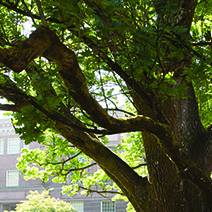 Trees in front of the Knight Library